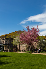 Duddingston and The Crags May 2018 - (2 of 117) (Philip Gillespie) Tags: canon 5dsr edinburgh spring summer scotland nature wild plants insects people flowers blooms trees bushes blossom gorse colour blue green yellow red orange purple pink clouds sun sunshine sky burst roads cliffs hills park garden road bokah birds fauna flora outdoor reserve insect petals landscape waterscape leaves branches mono monochrome black white