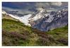 Le Schreckhorn depuis le sentier du First (jamesreed68) Tags: schreckhorn montagne mountain suisse schweiz oberland bernois paysage nature pierre roche canon eos 600d alpes alps groupenuagesetciel