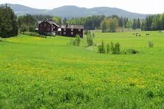 Landskap/Landscape (Svedmani) Tags: fs180520 landskap fotosondag