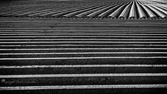 Lining [explored] (Ruud.) Tags: ruudschreuder nikon nikond810 d810 bw zwartwit monochrome blackandwhite blackwhite lijnen lines linie strepen stripes schaduw shadow schatten aardappelen kartoffeln potatoes