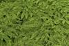 seleger moor-7714 (ver.sus) Tags: selegermoor moor plants rhododendron park pflanzen seleger