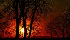 Coucher de Saoleil - Sunset (MichelGuérin) Tags: 2018 canada châteauguay coucherdesoleil exterior extérieur héritagesaintbernard ilesaintbernard lightroomcc maii may michelguérin nature nikon nikonafsnikkor200500mmf56eedvr nikond500 qc québec refugefauniquemargueritedyouville sunset trees arbres