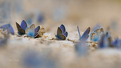 Butterfiles by kalbasz - A lot!