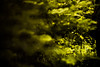 to the depth (N.sino) Tags: xt1 summicron90mm green forest weed 緑 雑草 森 光 神代植物公園