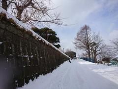 DSC_0672_1 (NanakoT) Tags: