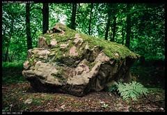 Rock (Falcdragon) Tags: zeissloxia2821 sonya7riialpha ilce7rm2 forest nature sarttilman liège belgium universityofliege green rock stone moss