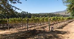 Domaine viticole de Mitre's Edge / Mitre's Edge Wine Estate (b-noy) Tags: afrique africa afriquedusud stellenbosch winery vignoble vin wine domaineviticole mitres mitresedge wineestate