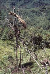 NG-D4--065b (Stichting Papua Erfgoed) Tags: papua stichtingpapuaerfgoed pace papuaheritagefoundation nederlandsnieuwguinea irianjaya irianbarat newguinea