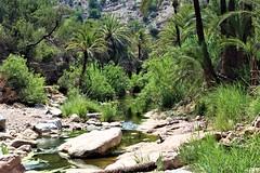 Rivière, valée paradis (Sush DG) Tags: palmier palmeraie valley vallée rivière eau water chemin nature natural maroc morocco paradis paradise