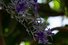 Purple (Sagadh) Tags: closeup closeups close