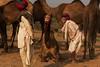 Conversations. Pushkar Mela. Rajasthan (Tito Dalmau) Tags: rabari men camels fair mela pushkar rajasthan india