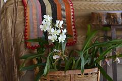 Decoração (Márcia Valle) Tags: decor stilllife naturezamorta casabonita orquídeas orchids decoração juizdefora