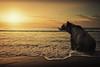 Freedom at last (olgavareli) Tags: olga vareli bear freedom animal rescue afternoon tranquility peace