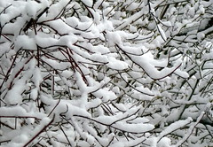 The day before May... (edenseekr) Tags: april30 snowfall snowy branches