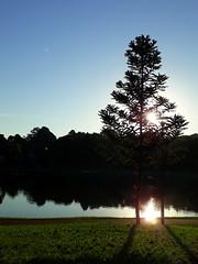 Suave é a cidade pra quem gosta da cidade (:: through my eyes ::) Tags: curitiba cwb paraná brasil brazil sul capital óperadearame sãolourenço parquesãolourenço araucária tree árvore parque park
