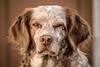 Koukla - a portrait (colorgraVie) Tags: hund nikonafpnikkor70300mmf4556eedvr nikond7200 tier dog animal picturesque malerisch