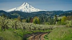 Spring Orchard Hood River Railroad Mt Hood 7691 E (jim.choate59) Tags: orchard springtime spring jchoate on1pics railroad mthood oregon landscape hoodriver hoodriveroregon scenic mountains railroadtracks tracks d610