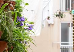 Jardín vertical (2 de 7) (GonzalezNovo) Tags: pwmelilla verticalgarden jardínvertical epifitas cintas claveldeaire tillandsia
