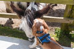 P1250212_edit (The Oldhams) Tags: cornwall donkeys flickadonkeysanctuary