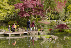 Después de la lluvia....los mejores reflejos... (Adri T fotografías) Tags: kyotogarden london londres uk jardín green verde parque jardínjaponés people gente turismo viaje viajar