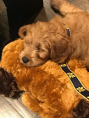 Ella's sweet Nola with her new best cuddle buddy!
