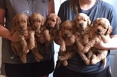 Ginger Girls pic 4 5-12