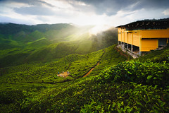 Tea plantation Cameron highlands, Malaysia (Patrick Foto ;)) Tags: agriculture asia asian background beautiful cameron countryside cultivation environment famous farm farmland field forest green grow growth harvest harvesting herb highland hill idyllic landscape malaysia meadow mountain nature organic outdoor place plant plantation rural scene sky summer sun sunlight sunny sunrise sunset tea terrace texture tourism travel tropical valley view tanahrata pahang my