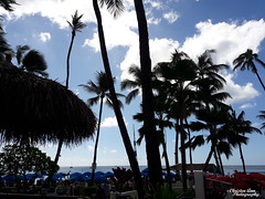 Hawaii_2017_0799 (Christen Ann Photography) Tags: 2017 bustourwithosricchau dukeswaikiki hawaii hawaii2017 hawaiicon holidays november2017 ohau usa