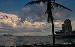 Ending the afternoon at Biscayne Bay. (Aglez the city guy ☺) Tags: biscaynebay miamifl miamicity lateafternoon walking waterways walkingaround outdoors architecture coconuttree seashore seascape sea seaport shore clouds cranes