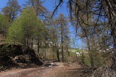 Ovronnaz (bulbocode909) Tags: valais suisse ovronnaz montagnes nature forêts arbres mélèzes printemps chemins vert bleu paysages