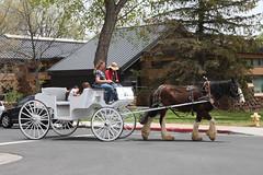 Merry-Go-Round Carriage Rides (twm1340) Tags: may 2018 flagstaff az arizona horse drawn carriage ride merrygoround