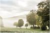 In der Heimat (ernst.koeppel) Tags: trees mist nebel fog foggy neblig landscape landschaft deutschland germany bavaria bayern atmosphäre atmosphere natur nature