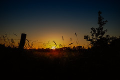 20.005.2018 sunday evening (FotoTrenz NRW) Tags: sunset evening eveningmood fence sunskynature moodypics grass silhouettes sunlight