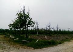 CPH - Byskoven (City Forest) (annindk) Tags: copenhagen trees