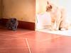 3630 - Watching (Diego Rosato) Tags: amy tito gatto cat gattino kitten animale animal pet fuji x30 rawtherapee