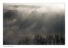Dame loire dans son lit de brume (Bruno-photos2013) Tags: loire loireatlantique paysage paysageligérien paysdeloire landscape foggy fog arbres fleuve brume bretagne brouillard brunolandry contrejour