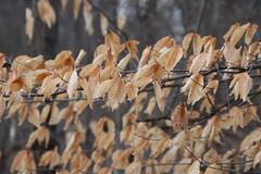 Morning Visit to Waterloo Recreation Area (Chelsea, Michigan) - April 21, 2018 (cseeman) Tags: parks stateparks michiganstateparks departmentofnaturalresources michigandepartmentofnaturalresources chelsea michigan waterloo waterloorecreationarea eddydiscoverycenter waterloopinckneytrail trees trails paths nature publicparks wildlife waterloorecreationareaapril2018 morning quiet eddydiscoverycentertrails discoverycentertrails waterloostaterecreationarea
