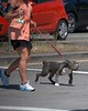 Crosswalking (Scott 97006) Tags: crosswalk woman female lady dog canine animal leash gait