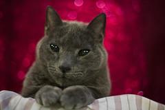 A Caturday Portrait (slightlysoggysoul) Tags: bokehlicious