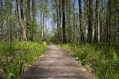 IMGP14109 (Łukasz Z.) Tags: poleskiparknarodowy nationalpark sigma1750mmf28exdchsm pentaxk3 starezaucze lubelskie rzeczpospolitapolska