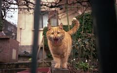 (Boris Asenov Kirov) Tags: ektar100 sofia streets gato kodak iso100 olympus mju 35mm film