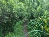Iph8091 (gzammarchi) Tags: italia paesaggio natura ravenna marinaromea puntealberete strada sentiero bosco monocrome