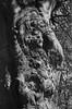 Old Botanic Garden Kiel - Akarelle (Azouras Defeat) Tags: 50mm akarelle alterbotanischergarten plustekoptikfilm7600i rolleisuperpan200 schneiderkreuznach silverfaststudioai880r11 silvermaxdeveloper viewfinder xenar blackandwhite schwarzweis selfdeveloped