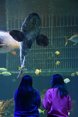 Wonders of Wildlfie National Museum and Aquarium (Adventurer Dustin Holmes) Tags: 2018 wondersofwildlife springfieldmo springfieldmissouri aquarium girls people viewing fish