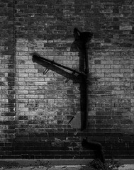 Urban Decay (* Daniel *) Tags: mamiya mamiya7ii markdaniel markdanielphotocom bergger berggerpancro berggerpancro400 berggerpancro400120 berggerpancro400rollfilm berggerpmk pmk pyrodeveloper pyro bw blackwhite blackandwhite asa250 greatyarmouth norfolk uk mono monochrome monotone urbandecay urban urbanwandering