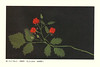 Raspberry (Japanese Flower and Bird Art) Tags: flower raspberry rubus rosaceae yasuko onishi modern woodblock picture book print japan japanese art readercollection
