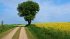 Danish countryside (Ingrid0804) Tags: denmark danishcountryside rurallandscape path lonetree yellowfield summertime monthofmay