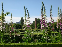 'My heart...'. Frankendael Park, Digitalis officinalis, Foxglove, and a Chimney, Amsterdam, The Netherlands (Rana Pipiens) Tags: frankendaelamsterdamthenetherlands digitalisofficinalis foxglove williamwithering williamwordsworth spring heart insect bees bumblebees lunch gloom sky park scencis landscape rainbow chimney