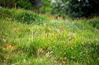 A 100 types of grass and then some, Malverns, Worcestershire