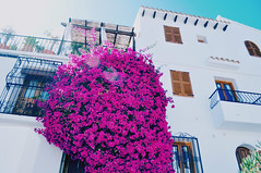 (Virginia Gz) Tags: altea alicante comunidadvalenciana españa spain europe architecture flowers summer mediterranean spring pink purple